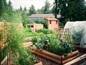 Planting a vegetable garden - 6 steps to your fabulous garden. (Click on picture to read article)