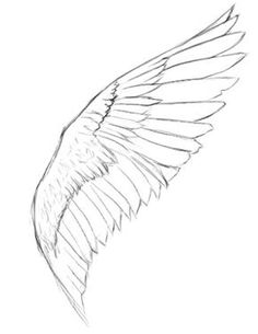 how to draw tinkerbell wings