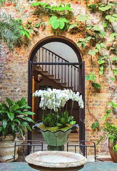 """Lush living: the stunning conservatory of - a sneak peek from """"Gardenista: The Definitive Guide to Outdoor Spaces. Indoor Garden, Outdoor Gardens, Indoor Courtyard, Indoor Plants, Porches, What Is A Conservatory, Ideas Terraza, Rose Uniacke, Lush"""