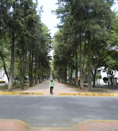 Homero Avenue - Polanco
