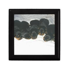 #Rottweiler Puppies Jewelry Box - #rottweiler #puppy #rottweilers #dog #dogs #pet #pets #cute