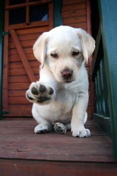 Paw in mid-air. What is the little one's plan? It's going to take a BIG DOGGY to grown into that paw. :) :)