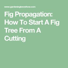 Fig Propagation: How To Start A Fig Tree From A Cutting