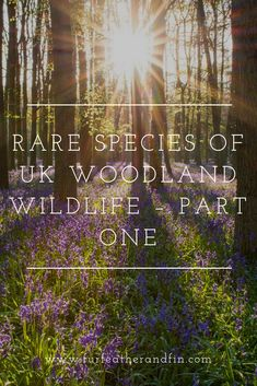 Rare Species of UK Woodland Wildlife – Part One Animal Fact File, Animal Facts, Spotted Woodpecker, Rare Species, British Wildlife, Rare Birds, Red Squirrel, Interesting Information, New Forest