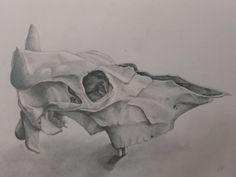 #study #drawing #skull #cowskull #pencil #graphite #artwork #graphic #blackandwhite #contemporaryart  #contemporary #classicalart Cow Skull, Classical Art, Graphite, Contemporary Art, Moose Art, Pencil, Study, Drawings, Artwork