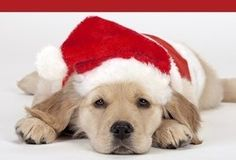 dog pictures with hats | Keep Your Pets Safe During the Holidays - Good Housekeeping