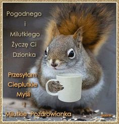 Życzę Ci Pogodnego i Milutkiego Dzionka Weekend Humor, I Love Coffee, How To Know, Kittens Cutest, Squirrel, Good Morning, Haha, Funny, Pictures