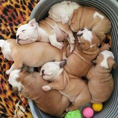 A bucket full of puppies.....