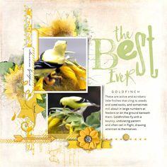 American Goldfinch #designerdigitals  #scrapbook #goldfinch #nature #birds