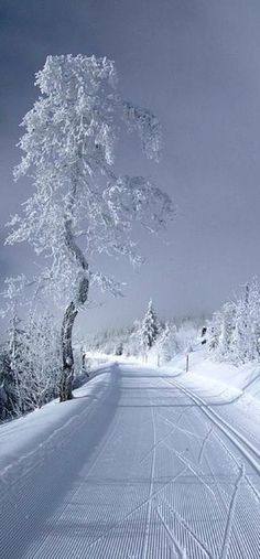 Beautiful snow scenery