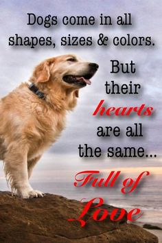 Full of Love! ♥ pet therapy, music for pets, pet music, paw friends