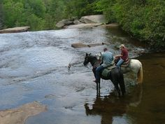 Wherever you eat, hurry it up so you won't miss your very own Horseback Waterfall Tour in Pickens. We're pretty sure it's the only one of its kind in the entire state!