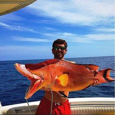 🐟 Biggest Hogfish I have ever seen! Usa Fishing, Vintage Fishing Lures, Deep Sea Fishing, Fishing Girls, Trout Fishing, Fishing Rod, Cool Fish, Big Fish, Scary Fish