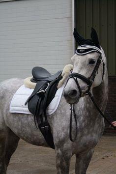 Paard te koop: NRPS - Allrounder - Merrie - NRPS merrie met veel potentie   HorseStep