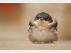 Sweet little baby bird