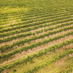 "We have a more traditional photo today of the vines of Margret river. Such beauty in symmetry. .  Check out this print and more on our website aboveunder.com.  Check us out on facebook ""aboveunder"" for exclusive deals. .  #aboveunder #welltravelled #beautifuldestinations #mytinyatlas #earthmissions #skypixel #drone #drones #hypebeast @theimaged #seeaustralia #hypelife #fromwhereidrone #passportexpress #wonderwandertravel #instagood #justanotherdayinwa #australia #hayshedhillwines #wine… Photo Today, Drones, Hypebeast, Wander, Shed, Australia, Earth, River, Traditional"