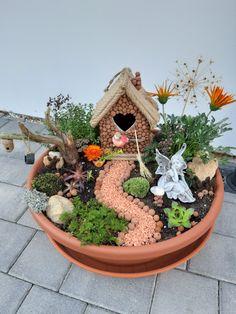 Mini Cactus Garden, Fairy Garden Pots, Indoor Fairy Gardens, Diy Garden Fountains, Dish Garden, Fairy Garden Houses, Miniature Fairy Gardens, Garden Crafts, Garden Projects