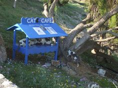 """This """"cat cafe"""" is neat- I think this would work nicely in the US too."""