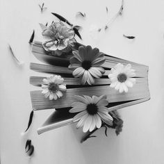 book, flowers, and vintage image& Book Aesthetic, Flower Aesthetic, Book Flowers, Lily Evans, Book Photography, Flower Petals, Book Worms, Flower Power, Beautiful Flowers