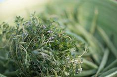 Sommerküche Hildegard Von Bingen : Die besten bilder von hildegard von bingen healthy food