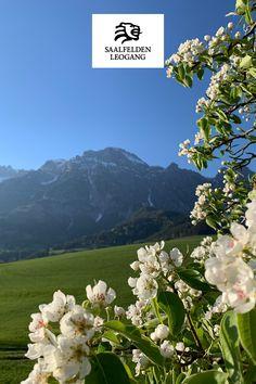 Einfach mal die Seele baumeln lassen. Salzburg, Bergen, Simple, Mountains