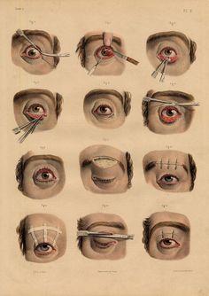 medical illust anatomy에 대한 이미지 검색결과