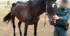 Dura sanción para el desalmado que casi mata de desnutrición a un caballo en Huelva FIRMA Y...