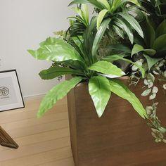 フェイクグリーンのバーネストファーン . バナナの葉のようにゆるく広がる姿が好きでプランターボックスに合うのではと思い入れてみました . ボックスの外に顔を出すように調整をしたらイメージ通りになりました . 本で大きく飾れるのでコストパフォーマンスも高めです . #造花ドットコム #フェイクグリーン #プランターボックス #バーネストファーン #緑のある暮らし #人工観葉植物 #グリーンのある暮らし