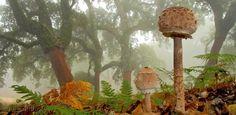 Vorschlag zum Wochenende: Pilzsaison ist eröffnet – Diese Karte hier online kaufen: http://bkurl.de/pkshop-213008 Art.-Nr.: 213008 | Foto: © | Text: Rolf Bökemeier