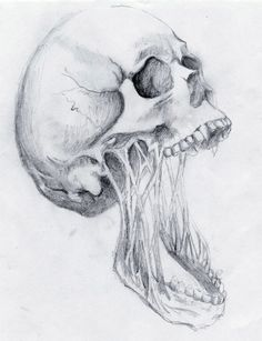 cranium decay pencil drawing