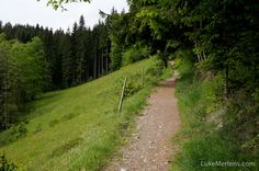 Black Forest Hike