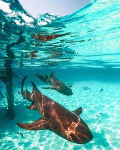Romantic Honeymoon Destinations, Turks And Caicos, Caribbean, Coastal, Swimming, Boat, Fish, Island, Travel