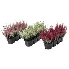 IKEA VÄXTLIG potted plants for flower box