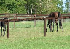Image Result For Wood Horse Fence Montana Property