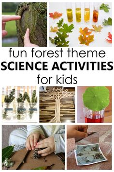 These fun forest science activities and tree theme science investigations are a wonderful way to help kids learn about the forest and parts of a tree. Science Activities For Kids, Steam Activities, Cool Science Experiments, Inspired Learning, Fun Learning, Help Kids, Kids Fun, Outdoor Classroom, Classroom Ideas