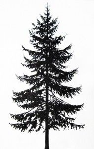 Tattoo Norway spruce