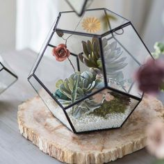 Shop terrain to grow your own garden under glass with our collection of glass terrariums, cloches, and terrarium planting supplies.