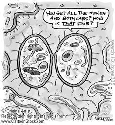 Mitosis humor :)  We just learned about this in science!!