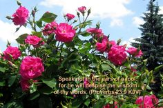 pics of verse let not your heart be troubled - Google Search