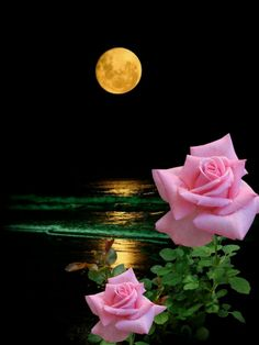 By Artist Unknown. Beautiful Rose Flowers, Beautiful Moon, Flowers Nature, Beautiful World, Beautiful Images, Moon Images, Moon Pictures, Good Night Image, Flower Wallpaper