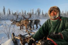 The Nenets from #Yamal, #Russia. At the border between taiga and tundra