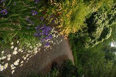 iris with nandina (partial shade or full sun)