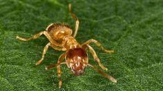 Einfacher Trick Schutzt Den Rasen Vor Ameisen Garten Ameisen