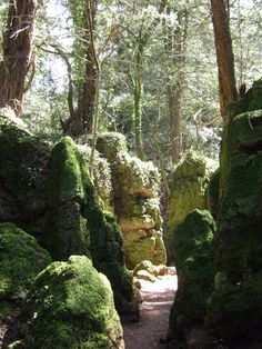 Puzzlewood, Forest of Dean. Inspiration for Middle Earth. Filming location for Doctor Who, Merlin, etc.