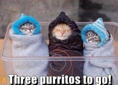 Three Purritos to go!