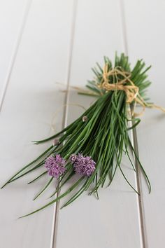 Chives   Because Blog