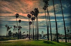 Stopover In Santa Barbara - photograph by Hanny Heim fineartamerica.com #santabarbara #palmtrees