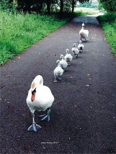 New Ideas funny animals and babies awesome Pretty Birds, Beautiful Birds, Animals Beautiful, Nature Animals, Animals And Pets, Cute Baby Animals, Funny Animals, Funny Birds, Bird Kite