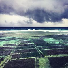 Storm, surf and seaweed @ #NusaCeningan  hectares of seaweed framing fields around the nusa's South of Bali. This is farming that doesnt need fresh water, no deforestation, and no fertilizers, just ocean! It seems most sustainable farming to me! It's a supernutrient fish alternative and it only takes 15 to 30 days to farm. It's also absorbs way more co2 than plants. Could this be a solution to save the planet? I'm gonna find out more about this!