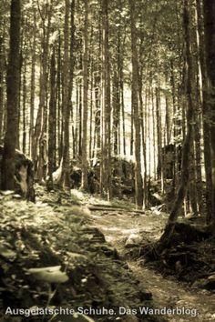 Waldstück bei St. Bartholomä. http://ausgelatschte-schuhe.de/watzmann-eiskapelle/